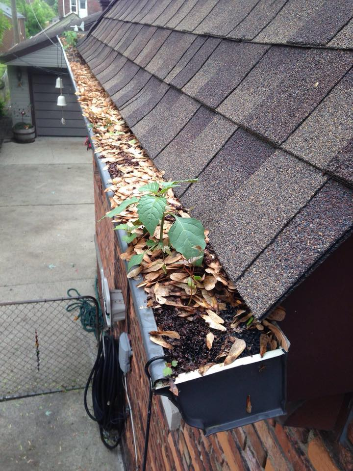 Gutter Cleaning In Woodinville